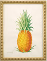 Watercolor of pineapple